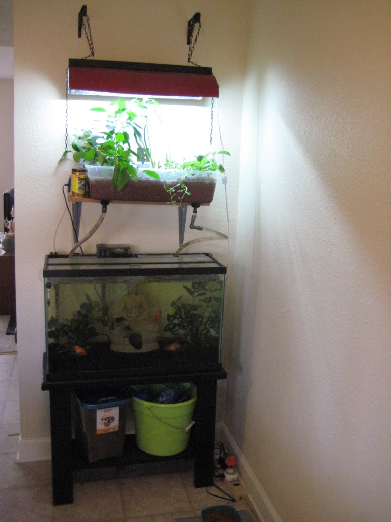 Fish Tank, Grow Bed and Light